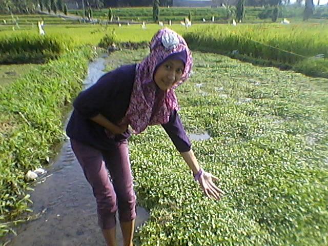 sayuran yang hidup di air bersih
